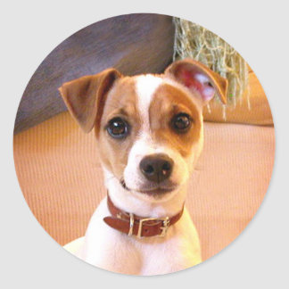 Jack Russell Terrier puppy stickers