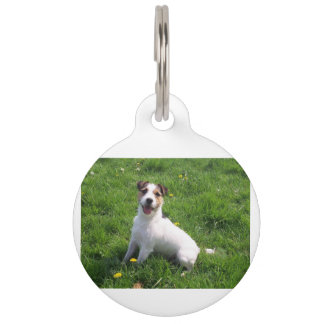 Jack-Russell_Terrier sitting in grass Pet ID Tag