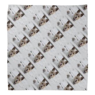 Jack Russell Terrier - Winnie - Oman Bandana
