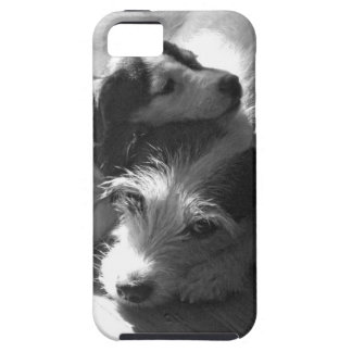 Jack Russell Terriers nap together in the sun iPhone 5 Case