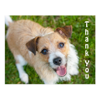 Jack Russell thank you card