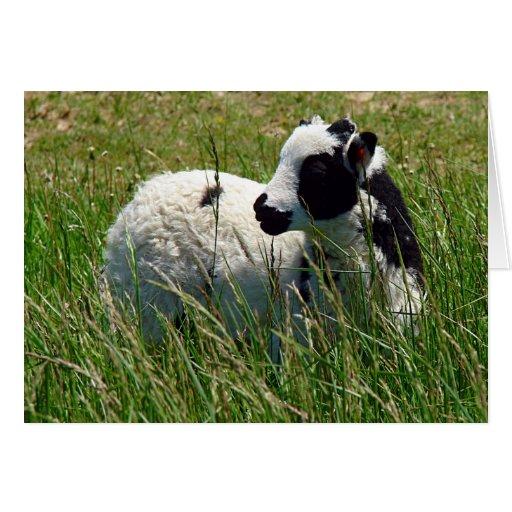 Jacob Ram Lamb, Easter Greeting Card