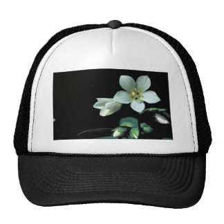 Jacob's Ladder Trucker Hat