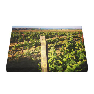Jacuzzi Vineyards in the Grapes Canvas Print