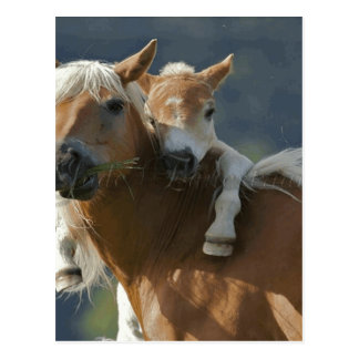 Jade Equestrian Postcard