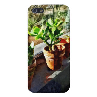 Jade Plants in Greenhouse iPhone 5/5S Covers