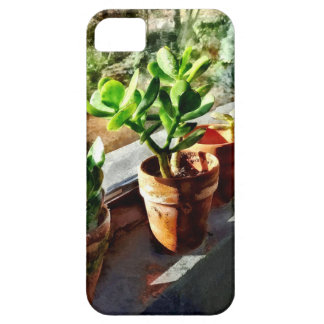 Jade Plants in Greenhouse iPhone 5 Covers