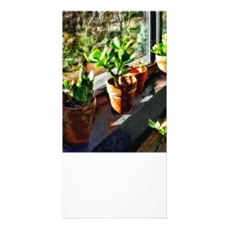 Jade Plants in Greenhouse Photo Greeting Card