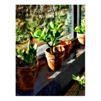 Jade Plants in Greenhouse Postcard
