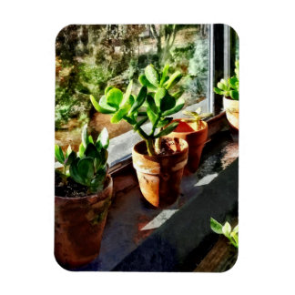 Jade Plants in Greenhouse Rectangular Photo Magnet