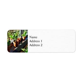 Jade Plants in Greenhouse Return Address Label
