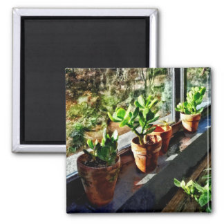 Jade Plants in Greenhouse Square Magnet