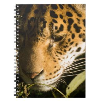 jaguar-7387 notebook