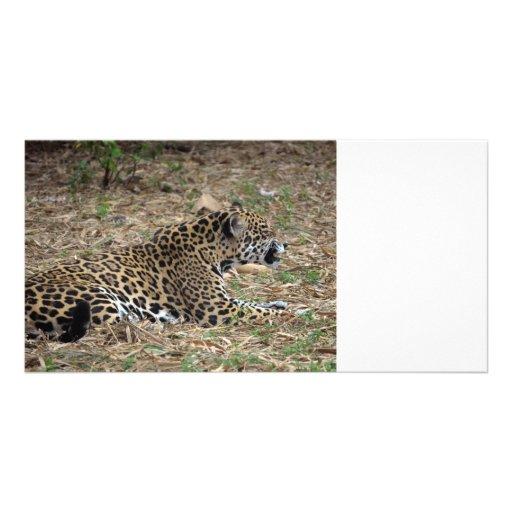 jaguar cat snarling side view feline customized photo card