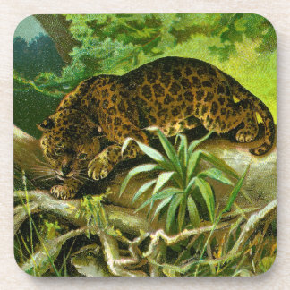 Jaguar Climbing Over Roots to Reach Water Drink Coaster