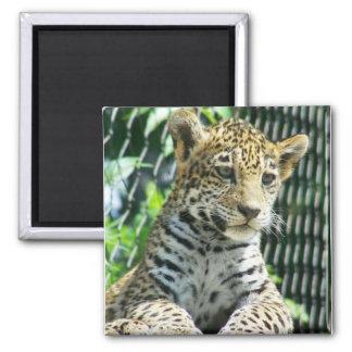 Jaguar Cub Magnet