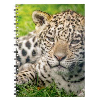 Jaguar cub spiral notebooks