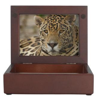 Jaguar feline portrait keepsake box
