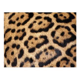 Jaguar Fur Photo Print Postcard