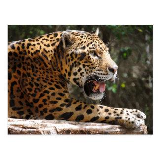 Jaguar III Postcard