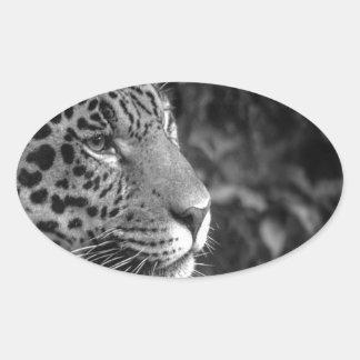 Jaguar in black and white oval sticker