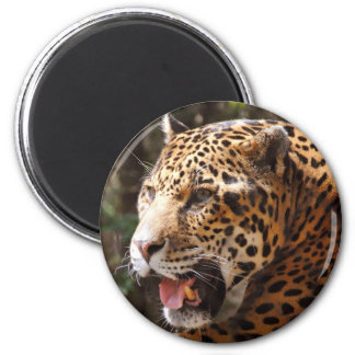 Jaguar in May II Magnet
