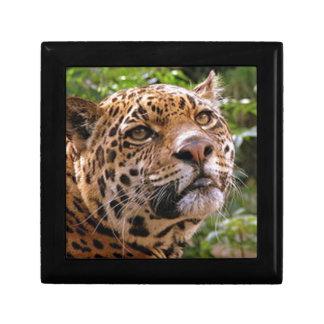 Jaguar Inquisitive Gift Box