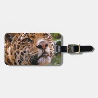 Jaguar Inquisitive Luggage Tag