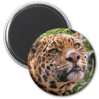 Jaguar Inquisitive Magnet
