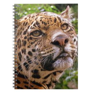 Jaguar Inquisitive Notebooks