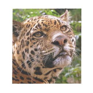 Jaguar Inquisitive Notepads