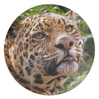 Jaguar Inquisitive Plate