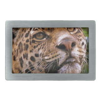Jaguar Inquisitive Rectangular Belt Buckles
