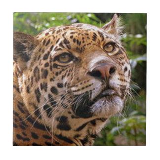 Jaguar Inquisitive Tile
