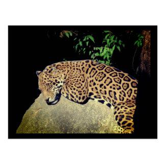Jaguar, Mexico Postcard
