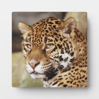 Jaguar Photo Plaque