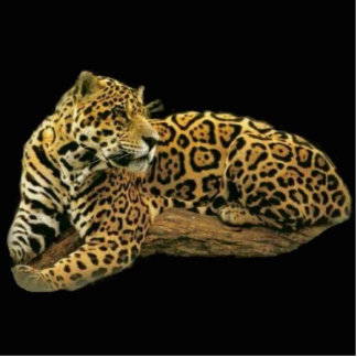 Jaguar Photo Sculpture