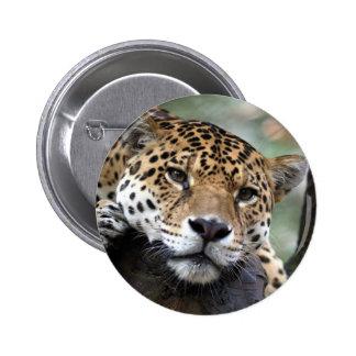 Jaguar resting 2 inch round button