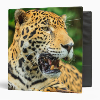 Jaguar shows its teeth, Belize Binders