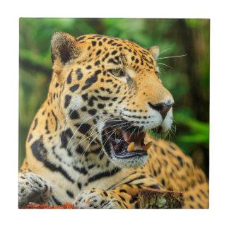 Jaguar shows its teeth, Belize Ceramic Tile