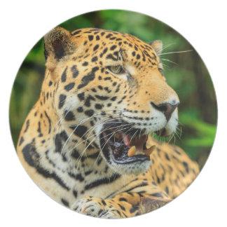 Jaguar shows its teeth, Belize Plates