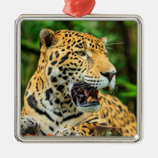 Jaguar shows its teeth, Belize Silver-Colored Square Ornament