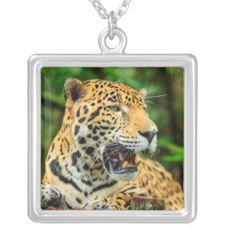 Jaguar shows its teeth, Belize Silver Plated Necklace