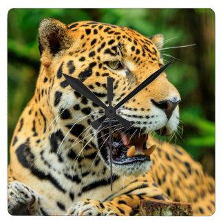 Jaguar shows its teeth, Belize Wallclocks