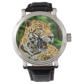 Jaguar shows its teeth, Belize Wristwatches
