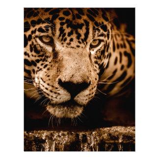 jaguar water stalking eyes letterhead