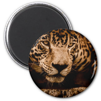 jaguar water stalking eyes magnet