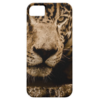 Jaguar Water Stalking Eyes Menacing Fearsome Male Case For The iPhone 5