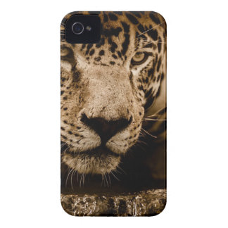Jaguar Water Stalking Eyes Menacing Fearsome Male Case-Mate iPhone 4 Cases
