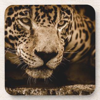 Jaguar Water Stalking Eyes Menacing Fearsome Male Coaster